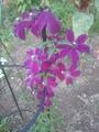 二番花が、満開🎵