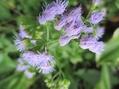 青い花で秋色気分