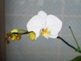 今日の発見 開花