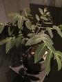 ウルトラ植物博覧会①