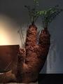 ウルトラ植物博覧会②