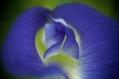 クリトリアの花の研究?