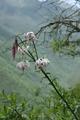 東チベットの花 最後に