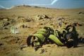 「写真展 南部アフリカ砂漠植紀行」のご紹介