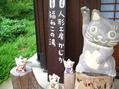 長湯温泉の野の花⑥