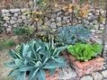 ひと坪ガーデン
