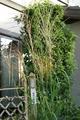 今朝の我が家の庭
