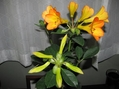 ビレア 二番花