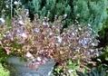 秋めいたお庭から