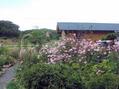 オープンガーデンとコスモス畑
