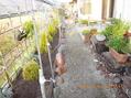 庭の線量低下を新しい培用土入れ替えで