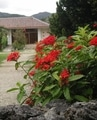 八重山レポ 植物編~花2 石垣