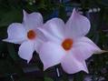 次々開花!