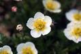 【植物図鑑】アガベなど12種類の植物情報追加