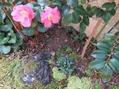 小さな白いツバキの花