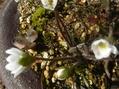春の庭仕事