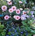 🌻ピンクの花たち~💕