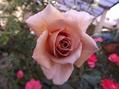 バラに囲まれて!