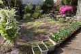 我が家の花壇(芝桜) 平成29年4月12日 茨城県境町