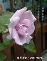 私のバラと落ち葉のその後