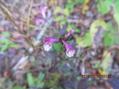 今頃山でみられる花