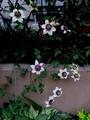 今日の庭 5月9日