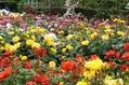 バラの花の庭も♪