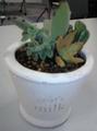 ATCの園芸教室を行ってきました。