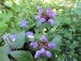 大好きな色のお花さんたち