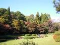 紅葉情報《東山植物園 平成23年11月20日》