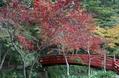 紅葉を見に行った。