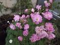 小さなお花達が、いっ~ぱい咲いてる~(●^o^●)