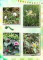 屋久島で見た花たち