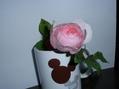 バラ(ヘリテージ)の切り花&収穫