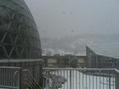 雪の中…新潟県立植物園