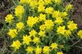 【植物図鑑】アゲラタムなど6種類の植物情報追加
