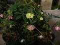 ハウスの花達。