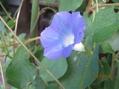 苔庭・ゆく夏を惜しんで咲く花たち