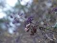 カエルと紫の実