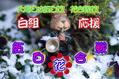 第一回年末紅白花合戦 こんこ、ひかるり VS rider1,marumushi 応援