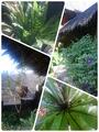 ホテルの植物