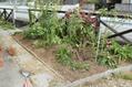 バス道沿いの庭植え替え
