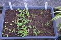 種採り、苗植えしましょうか?