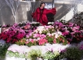 新潟県立植物園の災難:宮内の急襲