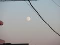 月は東に・・・