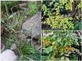 🍂今日の庭作業🍂