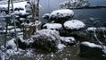 朝から雪です⛄