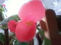 ついに!やっと!バラの芽が!(*^。^*)・・・出ました~