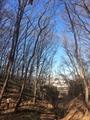 冬の城址散歩
