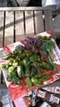 本日の朝採れ野菜です。